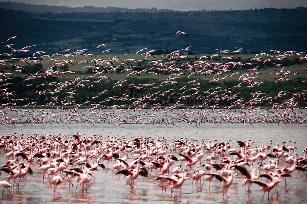 landscapes in magnificent Kenya